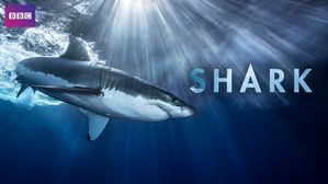 Image result for sharks netflix documentary
